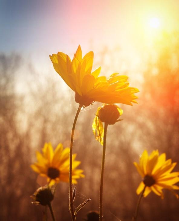 flowerinthesun